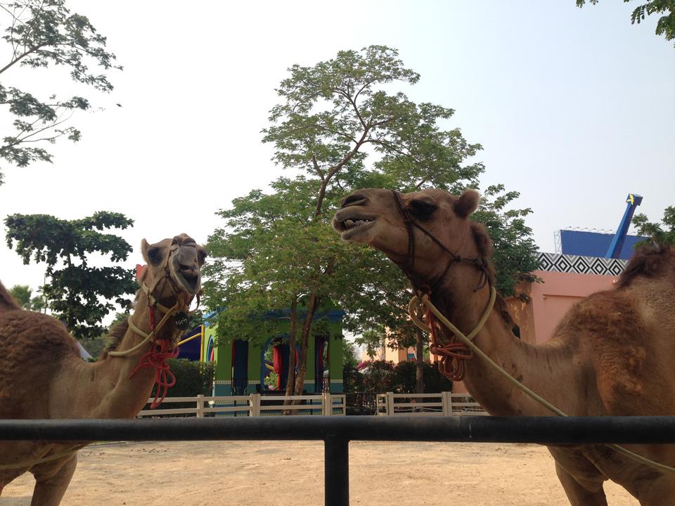 phetchaburi_camelrepublic15