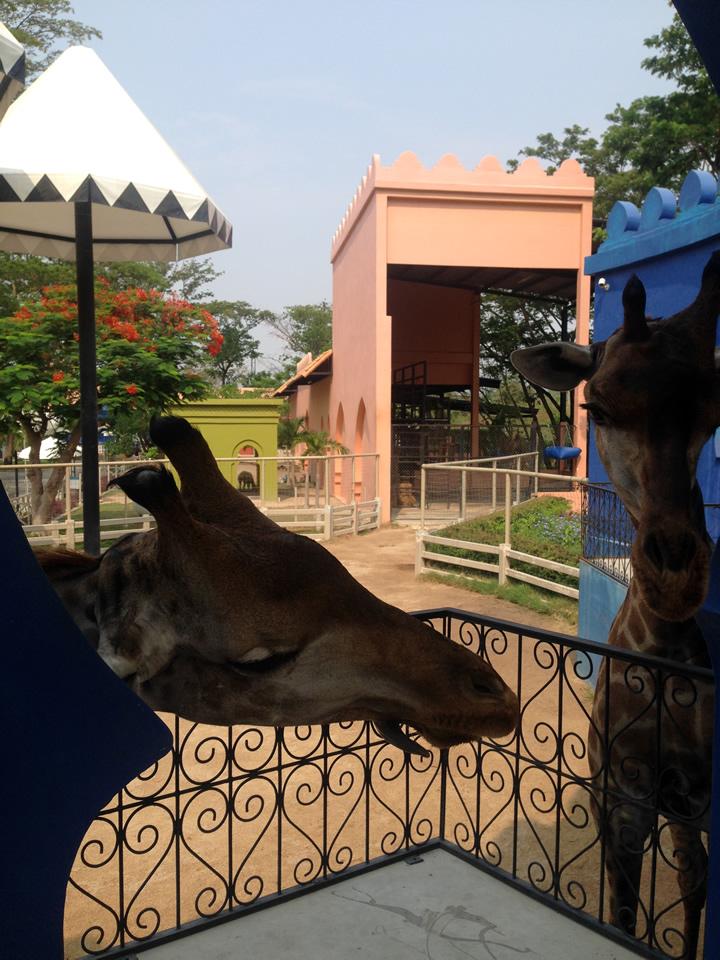 phetchaburi_camelrepublic29